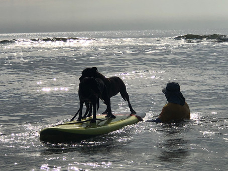 Sun and Surfdogs