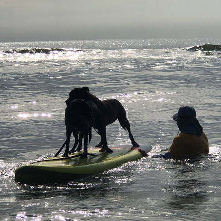 Sun and Surfdogs