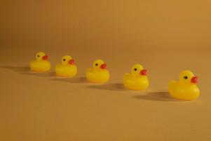 Ducks in a Row.jpg