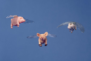 When Pigs Fly.jpg