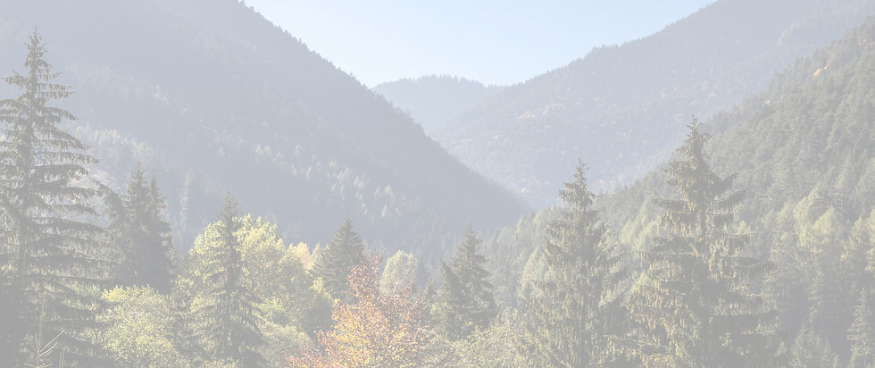 Landscape photo of tall pine trees in Sandpoint, Idaho.