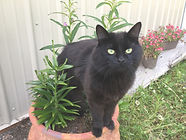Black cat standing inside a planter.
