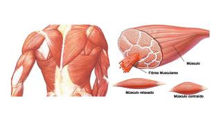 Lesões Musculares 3