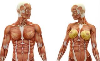Morfologia do Músculo Esquelético 4