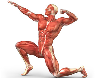 Predominância Muscular 2