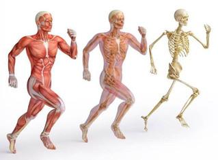 Morfologia do Músculo Esquelético 6