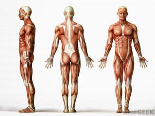 Morfologia do Músculo Esquelético 5