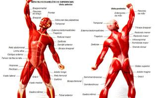 Morfologia do Músculo Esquelético 2
