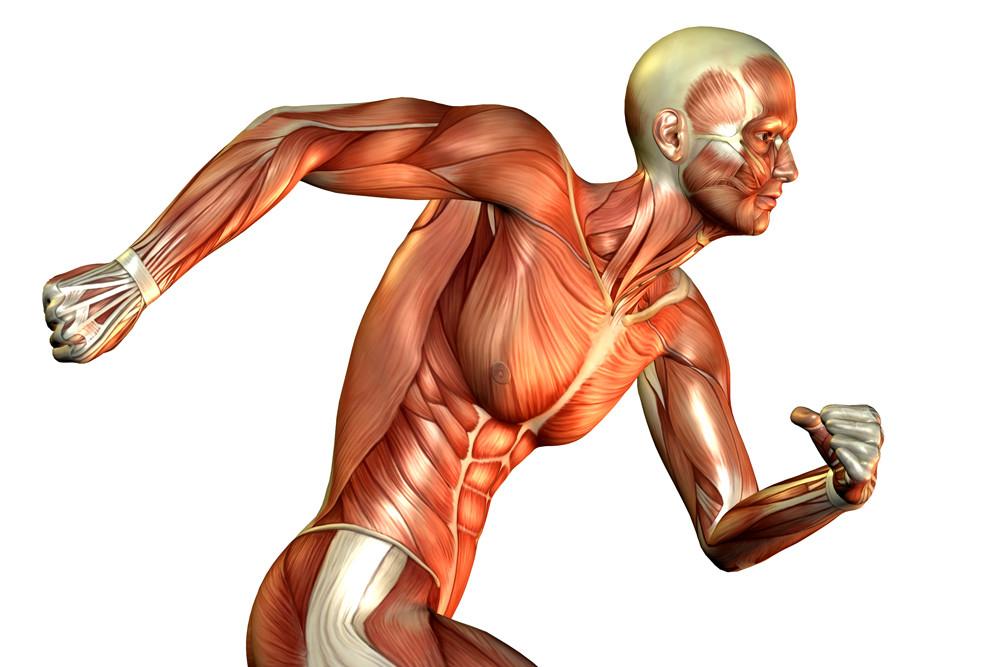 O que é a Patologia Muscular?