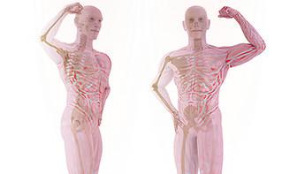 Morfologia do Músculo Esquelético 3