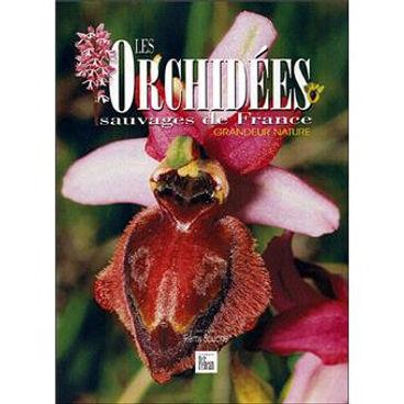 Les-orchidees-sauvages-de-France.jpg