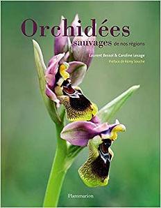 Orchidées_sauvages_de_nos_régions.jpg
