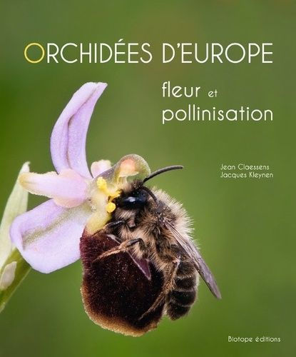 Orchidées_d'europe_pollinisation.jpg