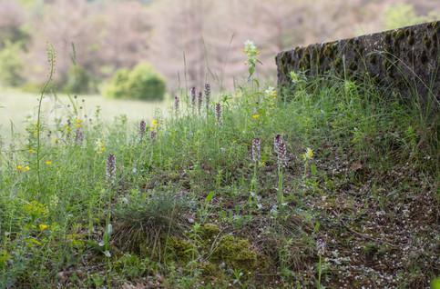 Aveyron 31/05/18