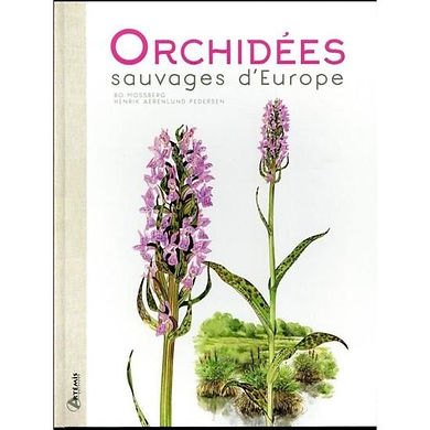 orchidees-sauvages-d-europe.jpg