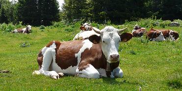 vache-correncon©OTCorrencon.jpg