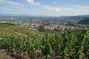 vine-3421728_1920.jpg