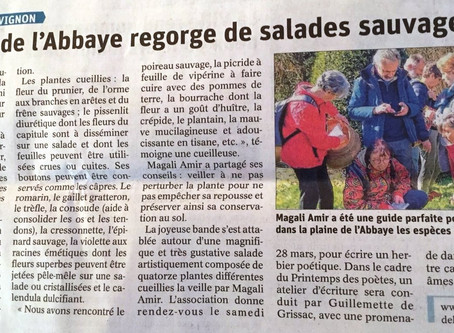 Article Vaucluse Matin Cueillette
