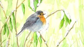 - Dimanche 10 octobre   -    Sortie ornithologique animée par Bruno Grenier