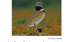 Affiche sortie ornithologique Pujaut dimanche 5 juin 2016