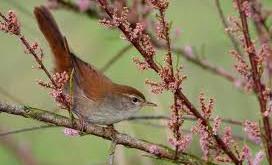 Compte-rendu de la sortie ornithologique du dimanche 10 octobre
