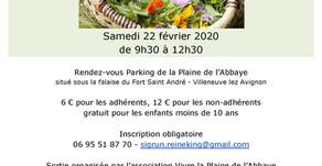 Sortie Cueillette de salades sauvages dans la Plaine le 22 février 2020