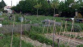 Le projet des Jardins partagés de la plaine de l'Abbaye