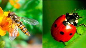 Insectes auxiliaires, les alliés du jardinier, 2éme édition