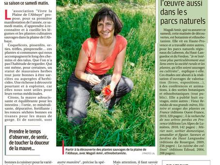 La Provence 15/03/2018 - Une matinée pour reconnaître les plantes sauvages