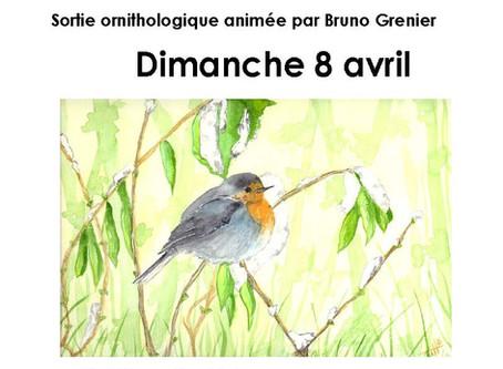 Les oiseaux de la Plaine de l'Abbaye  8/4/2018