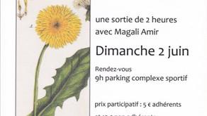 """Affiche sortie """"Plantes médicinales""""  le 2 juin 2013"""