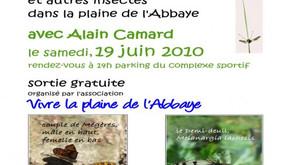 Affiche Observer les papillons Demi-deuil et Mégère et autres insectes ...19 juin 2010