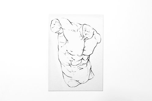 MALE ANATOMY - PRINT