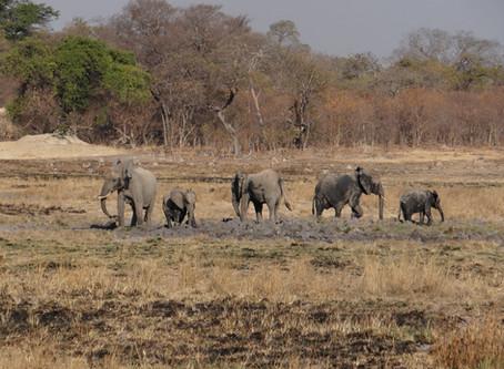 Op safari in Afrika – Kafue National Park