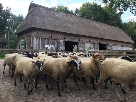 5 kindvriendelijke attracties in Drenthe