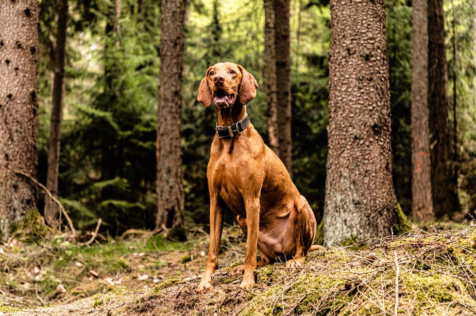 sebastian-matthias-haustierfotografie-tierfotografie-haustiere-hunde-pet-portraits-tierfotos-wiesbaden-frankfurt_O8A7504.jpg