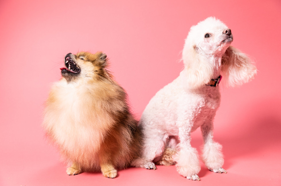 hundefotografie-tierportrait-tierfotogra