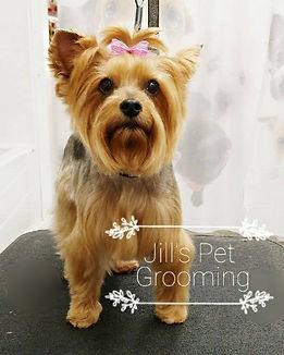 Spring Ladies Day_Jills Pet Grooming.jpg