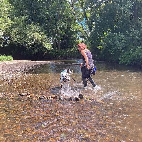 Dog Training Wrexham