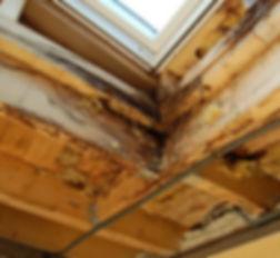 Bauschäden + Expertisen