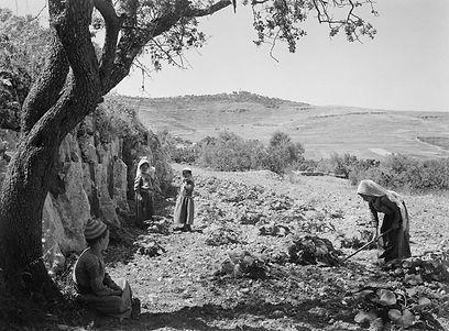 al-Jib-Archaeological-Tour-web.jpg
