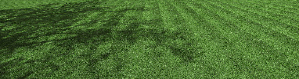 Beautiful grass lawn with shaded areas