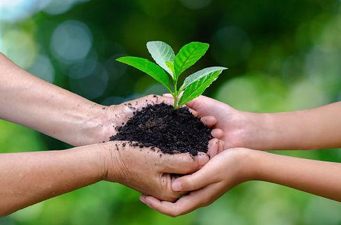 hands-holding-growing-seedlings_34998-99