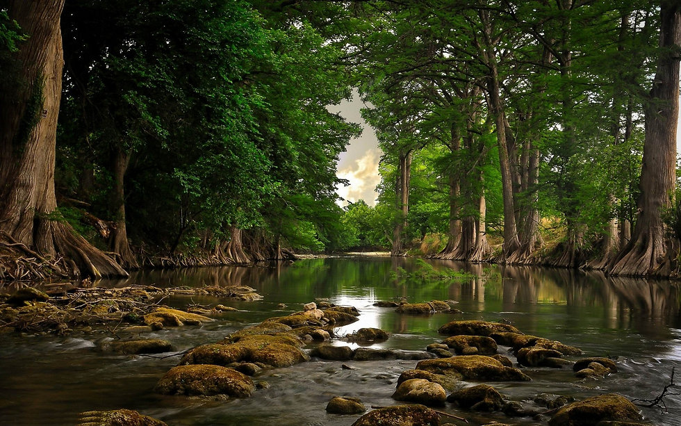 207124-trees-river-roots-forest-water-na