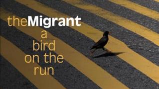 The Migrant (Anaïs Lopez)