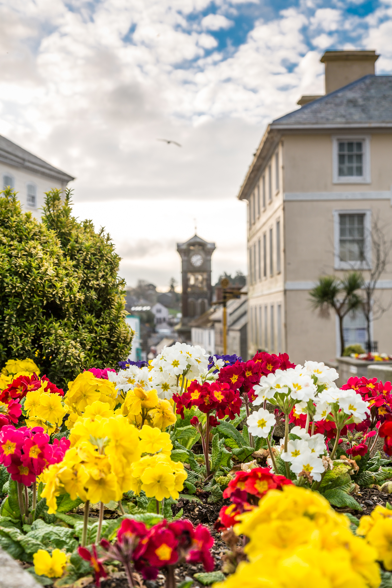 Liskeard in Bloom