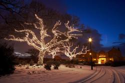 Exterior Christmas Tree Lighting