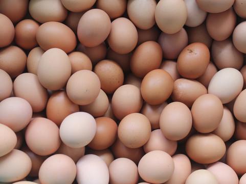 1804w-Eggs-1.jpg
