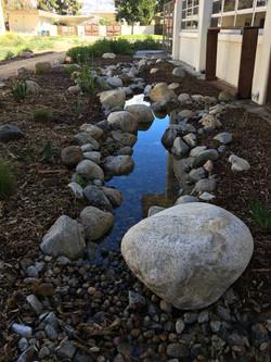 CA Native Garden at West High in Torrance
