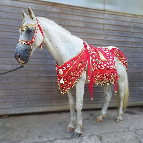 Costume Oriental de Parade - Coquillage rouge